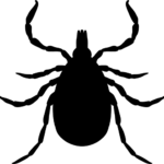 Black Tick Illustration